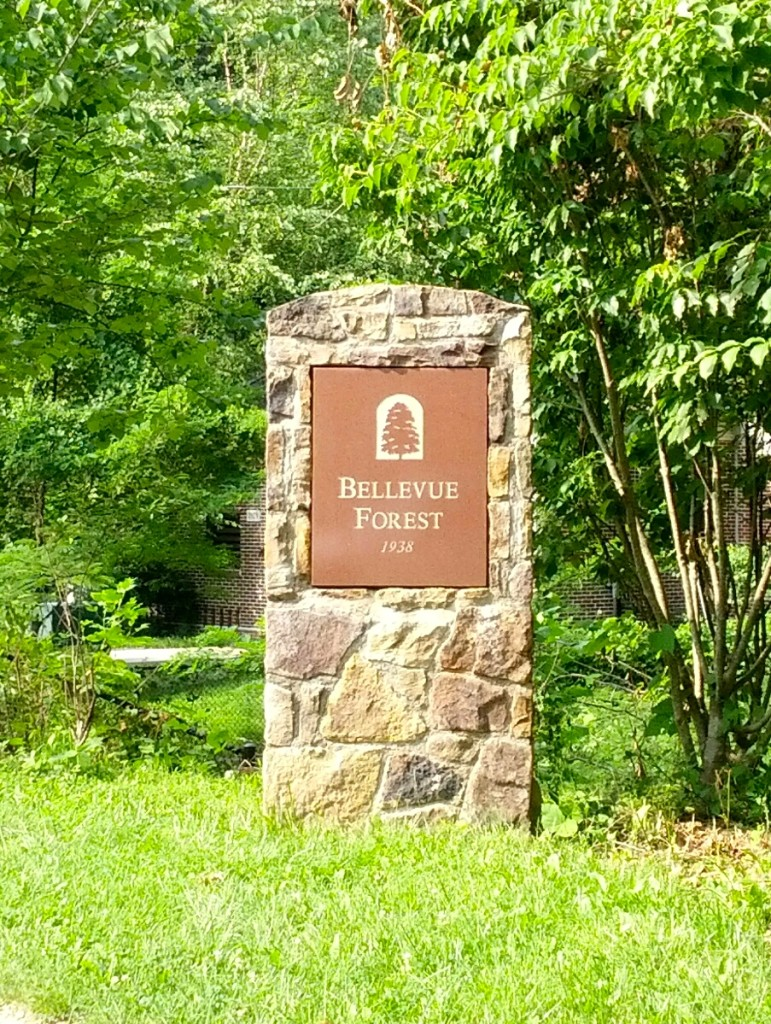 Bellevue Forest Arlington VA